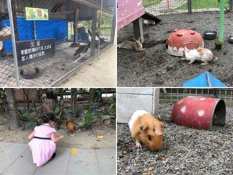 樹谷農場小動物區