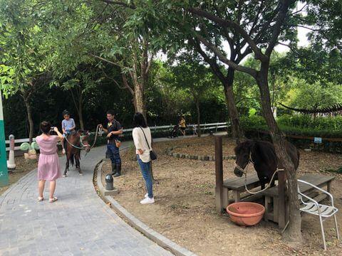 樹谷農場騎馬