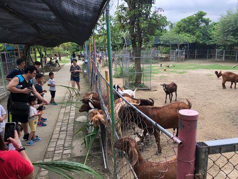 樹谷農場餵大羊