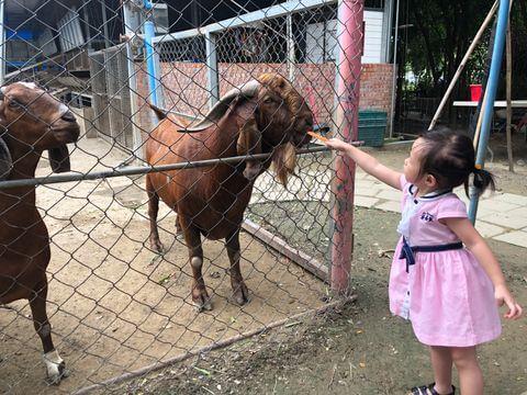 小孩樹谷農場餵羊