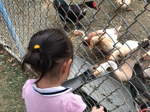 樹谷農場餵鵝